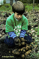 HS05-009a  Potato - child harvesting russett potatoes