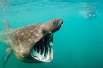 Underwater photographer and shark