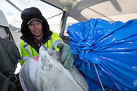 Volunteer Iditarod Air Force pilot, Daniel Hayden loads his plane with straw and musher drop bags to fly them to the Skwenta checkpoint at the Willow, Alaska airport during the Food Flyout on Saturday, February 20, 2016.  Iditarod 2016
