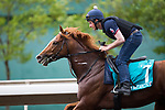 SHA TIN,HONG KONG-MAY 02: Stormy Antarctic,trained by Ed Walker,prepares for the Champions Mile at Sha Tin Racecourse on May 2,2017 in Sha Tin,New Territories,Hong Kong (Photo by Kaz Ishida/Eclipse Sportswire/Getty Images)
