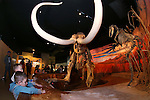 Zachary David, 6, and Declan McCourt, 5, check out the Columbian mammoth at the Nevada State Museum during the Road to the Future celebration in downtown Carson City, Nev. on Friday, Oct. 28, 2016. <br />