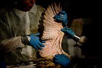 Archive: Gulf Spill Bird Rehab
