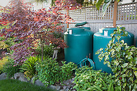 Rainwater cisterns connected to gutter from roof in small space backyard garden for water harvesting; Jennifer Carlson garden
