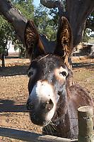 a donkey herdade de sao miguel alentejo portugal