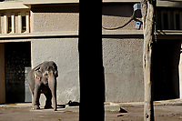 Bioparco di Roma<br /> Il Giardino Zoologico di Roma, fondato nel 1908, fu inaugurato il 5 gennaio 1911. <br /> Biopark of Rome<br /> The Zoological Garden of Rome, founded in 1908, was inaugurated on January 5, 1911.