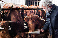 Pozzallo frazione di Romagnese (Pavia). Cooperativa Agricola Canedo: allevamento semibrado di bovini da carne. Franco nutre le mucche --- Pozzallo Romagnese (Pavia). Canedo Agricultural Cooperative: semi-wild breeding of beef cattle. Franco feeding the cows