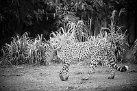 Wildlife @ the Zoo