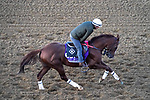 November 3, 2020: Mr. Freeze, trained by trainer Dale L. Romans, exercises in preparation for the Breeders' Cup Dirt Mile at Keeneland Racetrack in Lexington, Kentucky on November 3, 2020. John Voorhees/Eclipse Sportswire/Breeders Cup/CSM