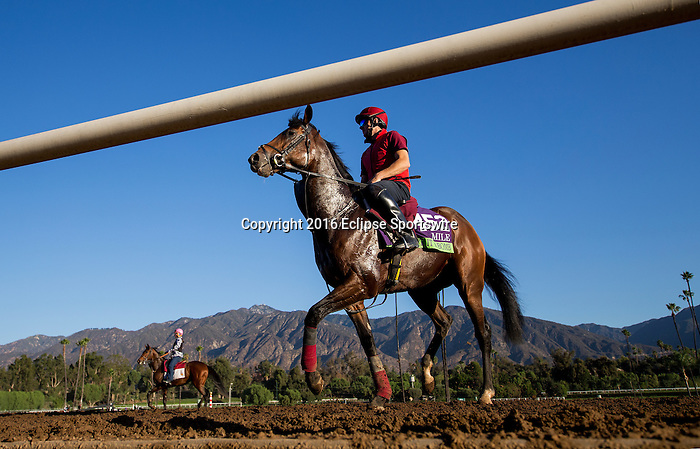 ARCADIA, CA - NOVEMBER 03:  Hit It a Bomb, owned by Mrs. Evelyn M. Stockwell and trained by Aidan P. O\'92Brien, exercises in preparation for the Breeders' Cup Mile at Santa Anita Park on November 03, 2016 in Arcadia, California. (Photo by Alex Evers/Eclipse Sportswire/Getty Images)
