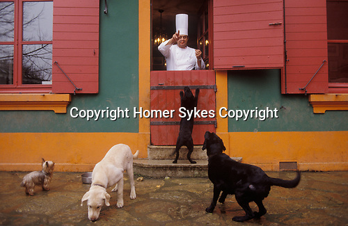 Paul Bocuse French chef  feeding his  dogs behind his restaurant in Lyon France 1980s