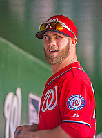14 April 2013: Washington Nationals outfielder Bryce Harper stands in the dugout prior to a game against the Atlanta Braves at Nationals Park in Washington, DC. The Braves shut out the Nationals 9-0 to sweep their 3-game series. Mandatory Credit: Ed Wolfstein Photo *** RAW (NEF) Image File Available ***
