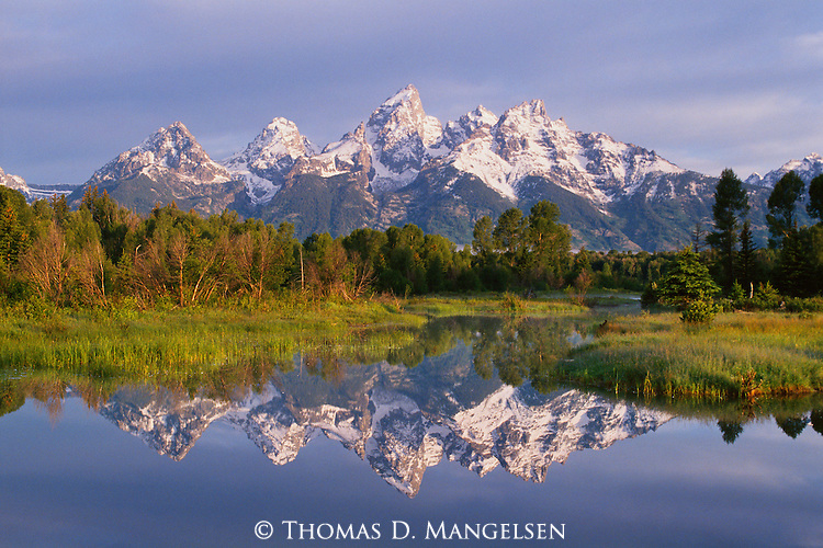 Tetons are reflected in a pond at Schwabachers Landing in Grand Teton National Park, Wyoming.
