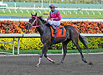 06 February 2010:  Barry's Money with jockey Eddie Castro in the Eight race at Gulfstream Park in Hallandale Beach, FL.