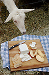 A doe, a  female goat, is curious about goat cheese at Haystack Mountain Goat Farm in Boulder.  (The pregnant female goats produce the milk that makes this very cheese).  Photo by ellen jaskol/rocky mountain news. 4/2/2002