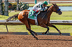 ARCADIA, CA  JULY 5:  #5 Gamine, ridden by John Velazquez,in the stretch of the Great Lady M Stakes (Grade ll) on July 5, 2021 at Los Alamitos Race Course in Los Alamitos, CA.  (Photo by Casey Pnillips/ Eclipse Sportswire/ CSM)