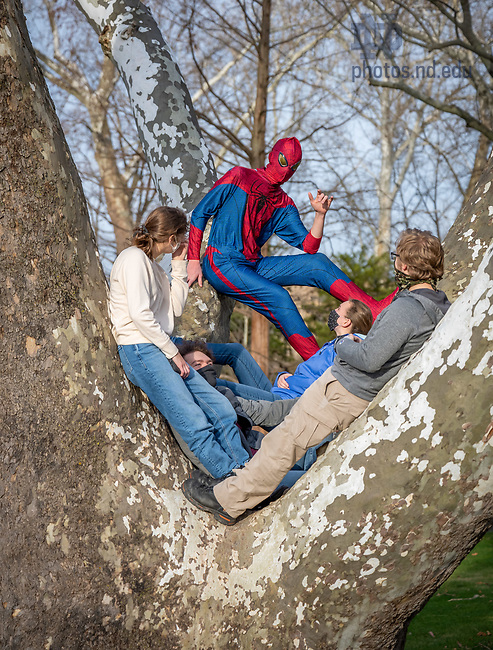 November 19, 2020; Students enjoy a warm late fall 2020 afternoon in the Sycamore tree near the Grotto. (Photo by Matt Cashore/University of Notre Dame)