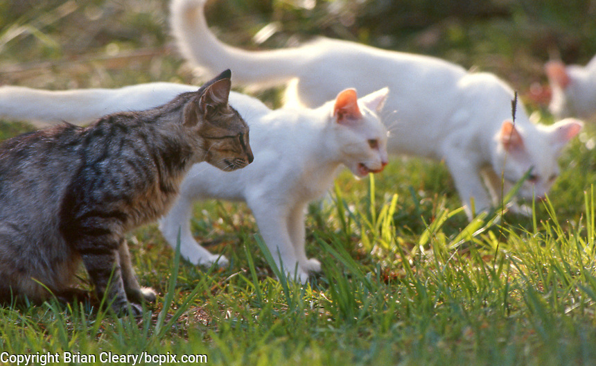 A group of feral cats, Daytona Beach, FL. (Photo by Brian Cleary/www.bcpix.com)
