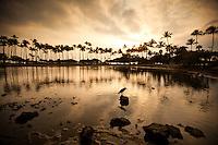 At sunset, a heron perches on a rock at the pond at Ala Moana Beach Park, O'ahu.