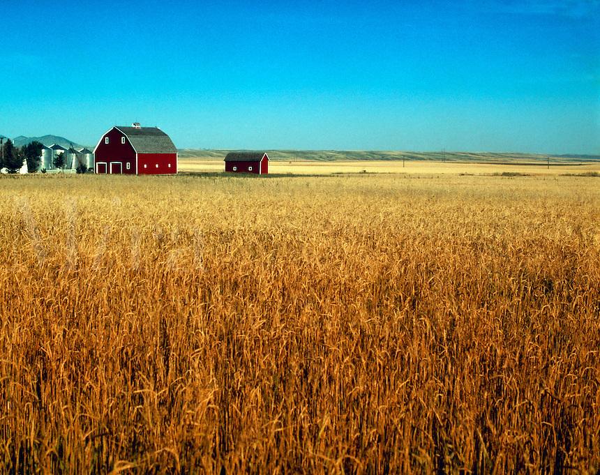 Farm and field.