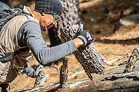 El biologo del instituto de biologia de la UNAM, Diego Barrales, busca alacranes y escorpiones bajo las roscas en el bosque, durante la Madrean Diversity Expedicion organizada por la org Greater Good.<br /> <br /> The biologist of the UNAM biology institute, Diego Barrales, looks for scorpions and scorpions under the threads in the forest, during the Madrean Diversity Expedicion organized by theGreater Good<br /> <br /> Madrense Discovery  Expedición (MDE) GreaterGood.org, en la sierra la Elenita, para la realización de un inventario biológico con un gran grupo de participantes para la observación de animales y plantas, entre los que se encientan especialistas de distintas disciplinas de la biología de Mexico y USA, conservacionistas, astrónomos, Comisión Nacional de Areas Naturales Protegidas (CONANP), ademas de la participación de universidades como UNAM, UNISON, ITSC, Universidad de la Sierra<br /> <br /> Los datos que se recaban en estas expediciones sirven como información de referencia para entender mejor las relaciones biológicas del Archipiélago Madrense y se usan para proteger y conservar las tierras vírgenes de las Islas Serranas de Sonora Mexico. Esta expedición binacional se unieron colaboradores tanto de México como de Estados Unidos con experiencias y especialidades muy variadas, con la intención de aprender lo más posible sobre la Sierra la Elenita.