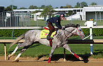 LOUISVILLE, KY - APRIL 24: Lani (Tapit x Heavenly Romance, by Sunday Silence) exercises on the track at  Churchill Downs, Louisville KY in preparation for the Kentucky Derby. Owner Ms. Yoko Maeda, trainer Mikio Matsunaga. (Photo by Mary M. Meek/Eclipse Sportswire/Getty Images)