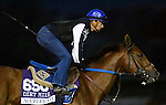 ARCADIA, CA - NOV 01: Accelerate, owned by Hronis Racing LLC and trained by John W. Sadler, exercises in preparation for the Breeders' Cup Las Vegas Dirt Mile at Santa Anita Park on November 1, 2016 in Arcadia, California. (Photo by Scott Serio/Eclipse Sportswire/Breeders Cup)