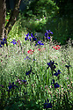 Irises, poppies and grasses. No Man's Land Garden, gold medal winner at the Chelsea Flower Show, 2014. Designed by Charlotte Rowe.