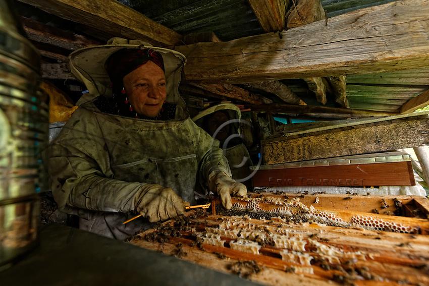 In the valley of the National Park, two women from the village of Ayder harvest the honey from their 60-hive apiary nestling below the trees near their summer home. The apiary is surrounded by a tea plantation.///Dans la vallée du Parc National, deux femmes du village de Ayder récolte le miel de leur rucher de 60 ruches niché sous les arbres près de leur maison d'été. Le rucher est entouré de plantation de thé.