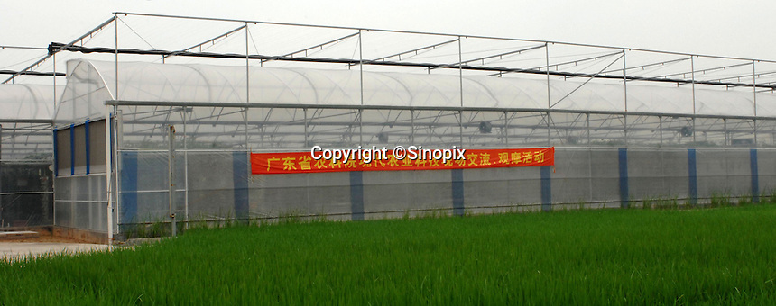 "The ""Space Breeding Exhibition Yard"" at the Guangdong Academy of agricultural Sciences, 50 miles outside Guangzhou city. Chinese scientists claim that vegetables and fruit cultivated from the space seeds are larger, more nutritious and safe to eat...PHOTO BY SINOPIX..PHOTO BY SINOPIX"