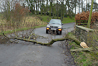 Fallen tree on road after high winds, Lancashire.
