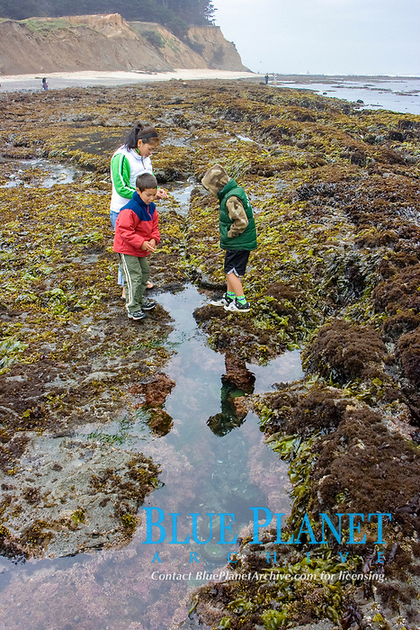 Visitors young and old enjoy exploring the coastline and diverse marine life found in the tide pools of the James V.Fitzgerald Marine Reserve. A California State Marine Park and National Marine Sanctuary located on the central California coast, California, USA (No MR)