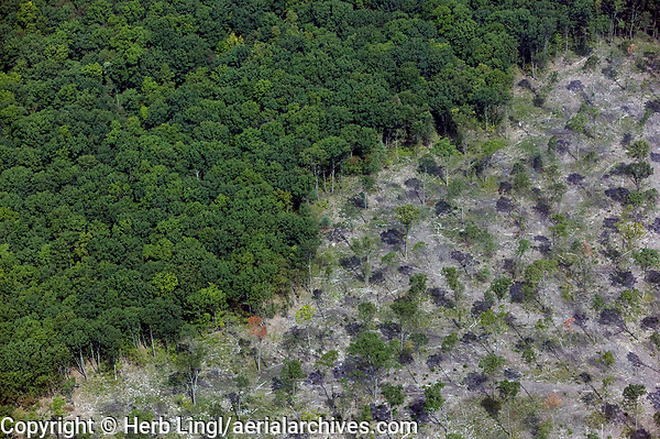 aerial photograph of aggressive thinning of a deciduous forrest in Pennsylvania