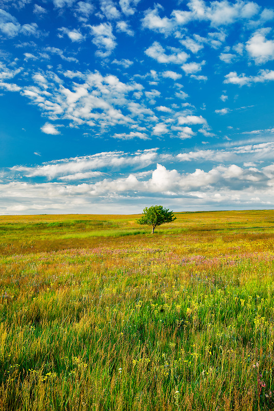 Lone tree and wildflowers. Zumwalt Prairie Preserve, Oregon