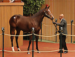 Hip #213 Giant's Causeway - Questress colt consigned by Gainesway sold for $550,000 at the Keeneland September Yearling Sale.  September 11, 2012.