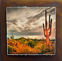 Sonoran Summer - Mixed Media - Arizona<br />