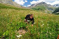 Chalet-Laboratoires de la station alpine du Lautaret ( attaché à  l'Université Joseph Fourier de Grenoble) : <br /> expérimentation en prairie d'altitude de l'interaction des  plantes entre elles.