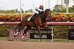 Mountain Eagle wins 2 year old maiden race at Gulfstream Park.  Hallandale Beach Florida. 12-08-2012