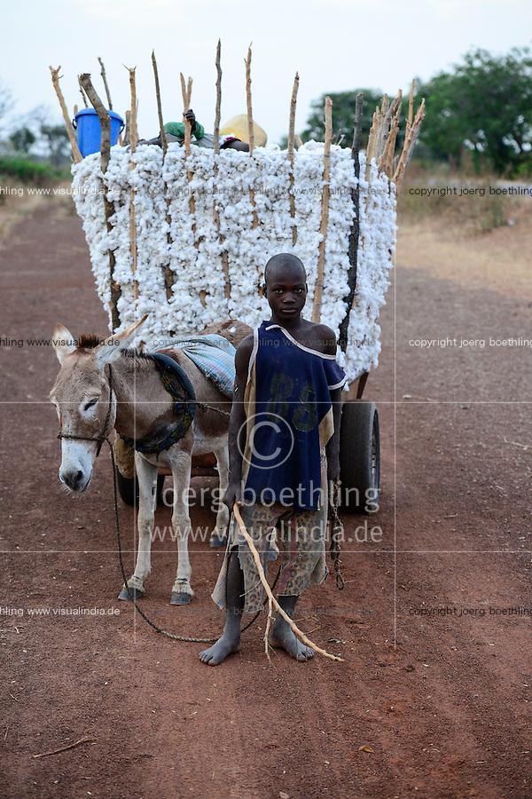 BURKINA FASO, village Soumousso, cotton harvest, children transport harvested cotton with donkey cart to their village / Baumwolle Ernte, Kinder transportieren Baumwolle mit einem Eselkarren vom Feld in ihr Dorf