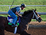 October 27, 2014:  Sayaad, trained by Kiaran McLaughlin, exercises in preparation for the Breeders' Cup Mile at Santa Anita Race Course in Arcadia, California on October 27, 2014. Scott Serio/ESW/CSM