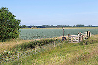 Large scale brassica production incorporating conservation - Lincolnshire, July