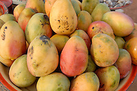 "Afrika Westafrika Burkina Faso .Verkauf von Mangos auf dem Markt -  laendliche Landwirtschaft Afrikaner afrikanisch xagndaz | .Africa west-africa Burkina Faso.selling Mangoes at market in village  -  agriculture  .| [ copyright (c) Joerg Boethling / agenda , Veroeffentlichung nur gegen Honorar und Belegexemplar an / publication only with royalties and copy to:  agenda PG   Rothestr. 66   Germany D-22765 Hamburg   ph. ++49 40 391 907 14   e-mail: boethling@agenda-fototext.de   www.agenda-fototext.de   Bank: Hamburger Sparkasse  BLZ 200 505 50  Kto. 1281 120 178   IBAN: DE96 2005 0550 1281 1201 78   BIC: ""HASPDEHH"" ,  WEITERE MOTIVE ZU DIESEM THEMA SIND VORHANDEN!! MORE PICTURES ON THIS SUBJECT AVAILABLE!! ] [#0,26,121#]"