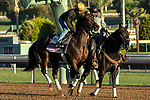 ARCADIA, CA  OCTOBER 25: Breeders' Cup Juvenile Fillies entrant Donna Veloce, trained by Simon Callaghan, exercises in preparation for the Breeders' Cup World Championships at Santa Anita Park in Arcadia, California on October 25, 2019. (Photo by Casey Phillips/Eclipse Sportswire/CSM)