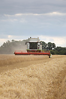 21.7.2020 Harvesting Winter Wheat in the Lincolnshire Fens <br />  ©Tim Scrivener Photographer 07850 303986<br />      ....Covering Agriculture In The UK.