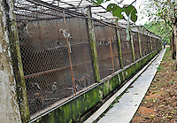 Long Tailed Macaque monkeys at the Conghua Yueyuan Laboratory Animal Breeding Center, Guangdong Province, China. The center breeds monkeys mostly for export to the US and Europe where pharmaceutical and cosmetic companies use them vivisection...SINOPIX PHOTO