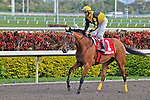 14 February 2010: Blackwell with John Velazquez in the Coconut Grove Stakes at Gulfstream Park in Hallandale Beach, FL.