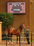 12 September 2010.  Hip #45 Street Cry (IRE) - Guerre Et Paix colt sold for $310,000 at the Keeneland September Yearling sale.  Consigned by Eaton sales.