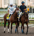 HALLANDALE BEACH, FL - February 3: Audible, #4, and Javier Castellano parade onto the track prior to the Holy Bull Stakes (Grade II) for trainer Todd Pletcher at Gulfstream Park on February 3, 2018 in Hallandale Beach, FL. (Photo by Carson Dennis/Eclipse Sportswire/Getty Images.)