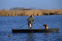 Europe/France/Pays de la Loire/44/Loire-Atlantique/Parc Naturel Régional de Brière/Ile Fedrun: Alain Divet ramasse ses canards apelants - Chasseur et chien de chasse sur une barque - AUTORISATION N°236
