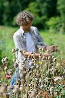 Collecting Seed from Poppies