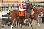 """Wicked Strong - Hard Spun x Moyne Abbey (Charsmatic)<br /> <br /> Honor Code (inside) with Javier Castellano aboard battles with Cairo Prince (#9) to win the 100th running of the Grade II Remsen Stakes for 2-year olds, going 1 1/8 mile at Aqueduct Racetrack. Trainer Claude """"Shug"""" McGaughey.  Owners Lane's End Racing and Dell Ridge FARM."""